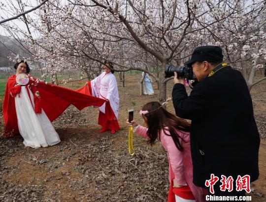 古装爱好者着汉服赏杏花,引来众多摄影爱好者围观拍照。 韩章云 摄