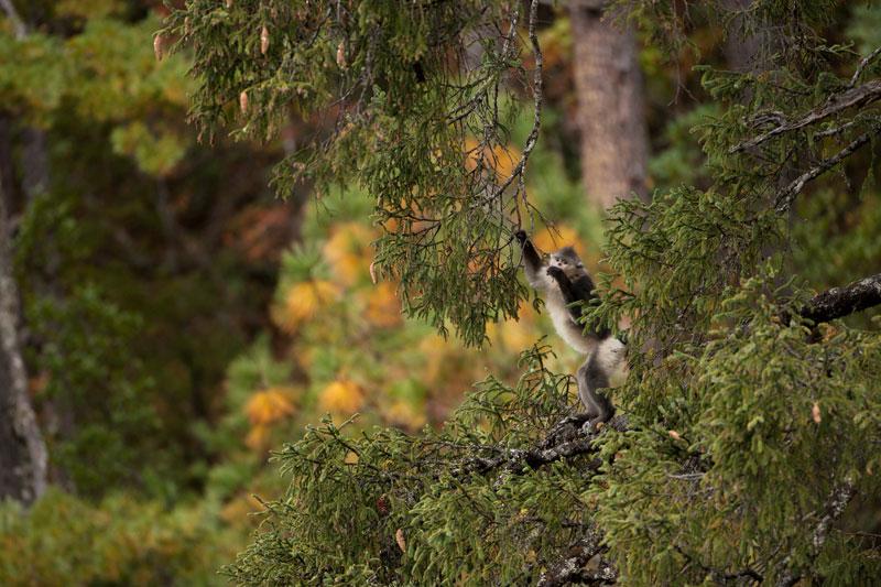 摄影家镜头下的森林景观