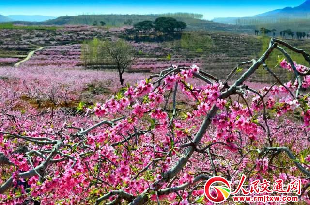 2019年第八届山东·沂水(泉庄)桃花艺术节即将开幕
