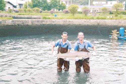 我国冷水鱼产业前景广阔