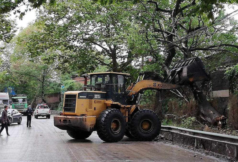 湖北黄石:枯木挡路隐患大民警冒雨忙清理