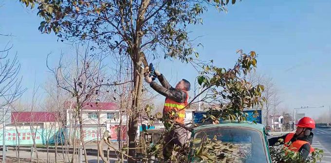 江苏灌南专项整治新港大道遮挡视线绿化