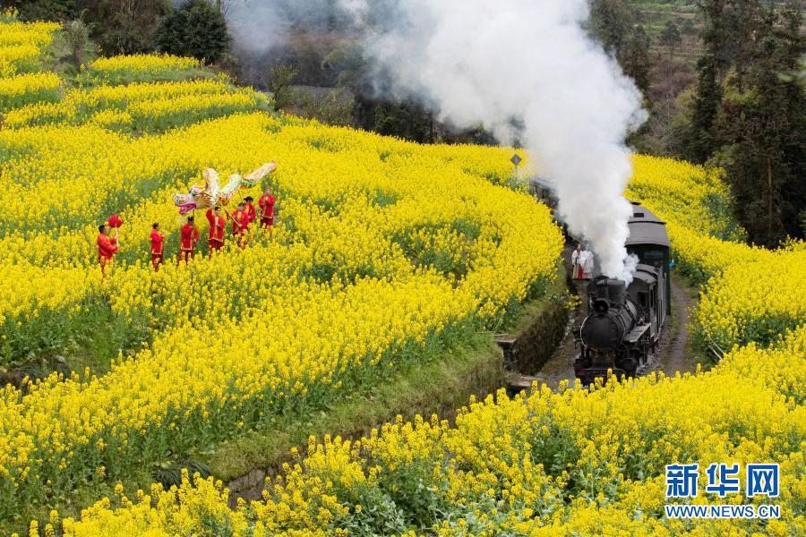 坐着小火车 穿越看花海