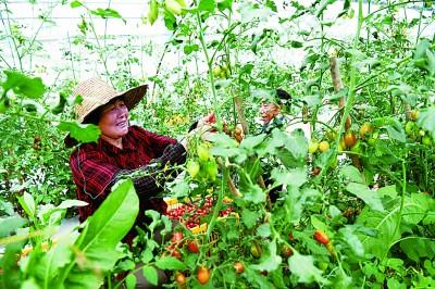 乡村振兴:农业更强、农村更美、农民更富