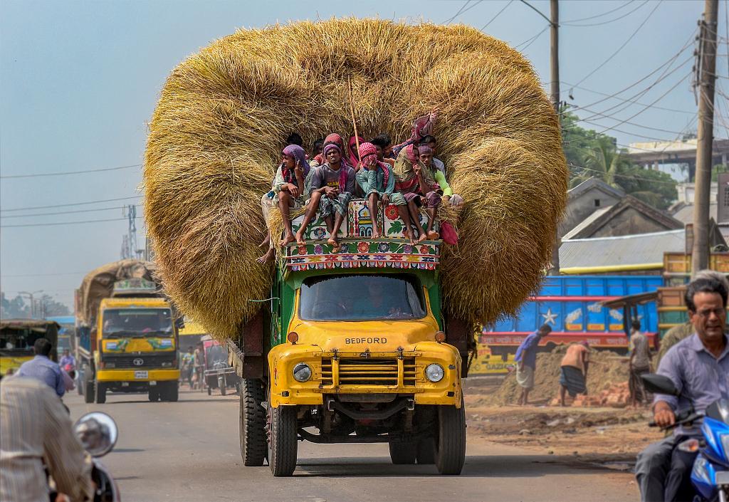 """孟加拉司机驾车运送稻草捆 """"头重脚轻""""危险驾驶"""